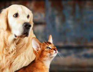 Cuidados básicos com o Pet